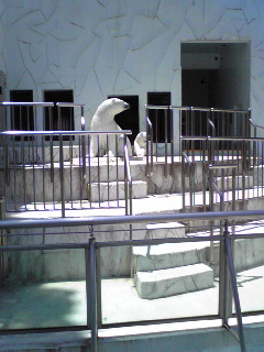 I love Zoo!