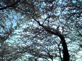花の飛鳥山