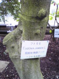 バナナワニ園ではしゃいでみる